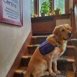 Monet – our Facility Dog!